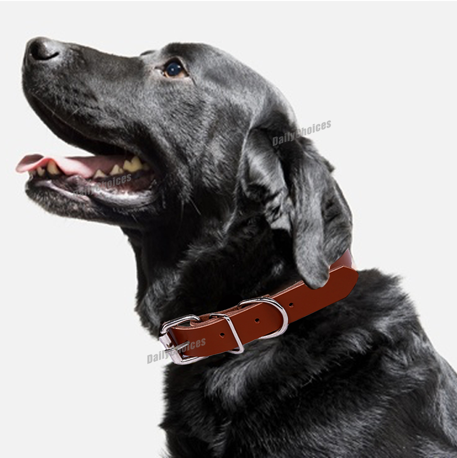 Leather Dog Collar High Quality Full Buckle SIZES XS – XXL